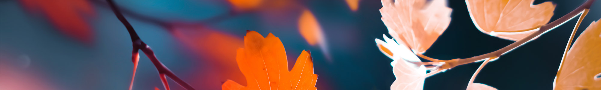 close up of sunlight coming through autumn leaves